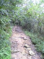 まるで沢登り状態の飯野山登山2