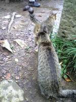 ウコッケイと子猫2