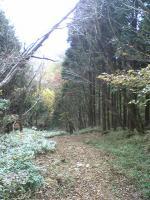 徳島県国見山登山道5