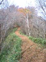 徳島県国見山登山道6