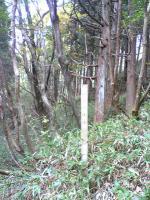 徳島県国見山登山道4