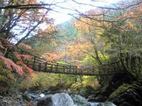 奥祖谷二重かずら橋の美しい紅葉