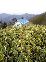 剣山系一ノ森頂上からの眺望2