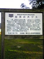 徳島県三加茂町の大楠2