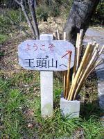 王頭山登山道1