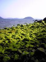 美しい小手島の海岸3