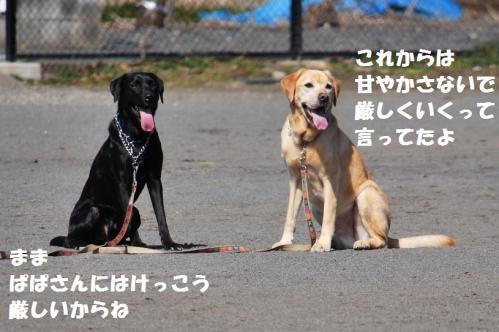 DSC_218620120227.jpg