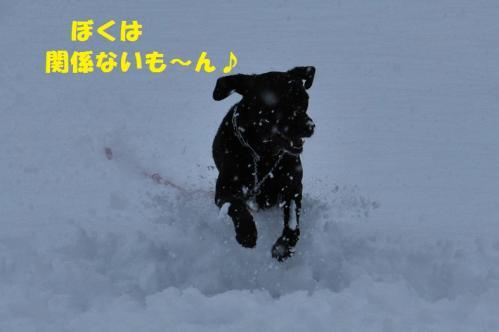 DSC_232720120229.jpg