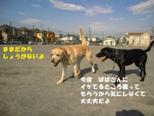 IMG_3517_20110627134921.jpg