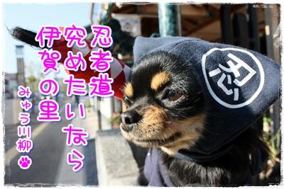 01_20100501152852.jpg
