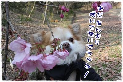 02_20100406000311.jpg