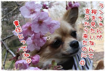 03_20100406000310.jpg