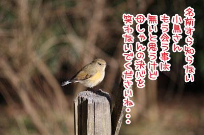 04_20100213144740.jpg