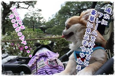 08_20100512150335.jpg