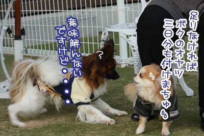 09_20100304205339.jpg