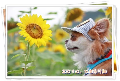 102_20100911140718.jpg