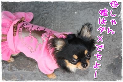 10_20100410143532.jpg