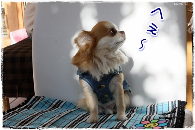 10_20100501145059.jpg