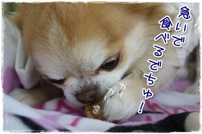 13_20100410143557.jpg