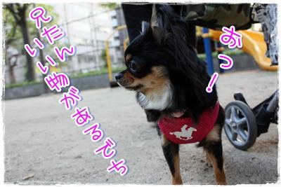 14_20100507174531.jpg