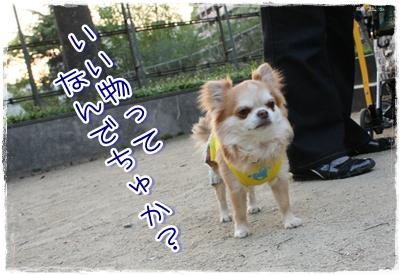 15_20100507174531.jpg