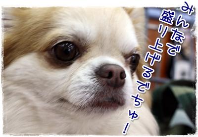 22_20100418123814.jpg