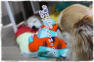 26_20100523195223.jpg