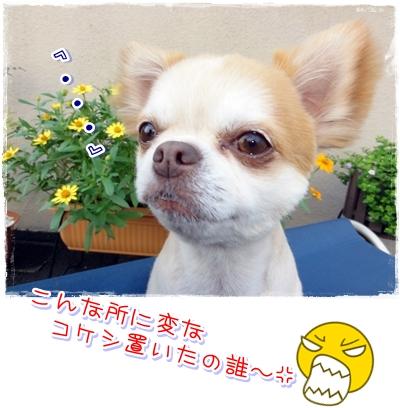 26_20100810222536.jpg