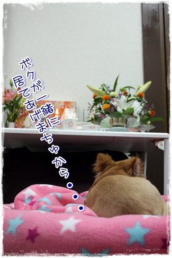 31_20100523193857.jpg