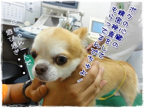36_20100901111805.jpg