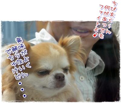 37_20100809184310.jpg