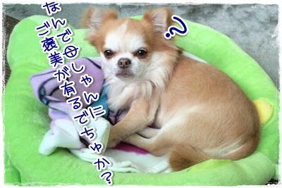 41_20100416003950.jpg