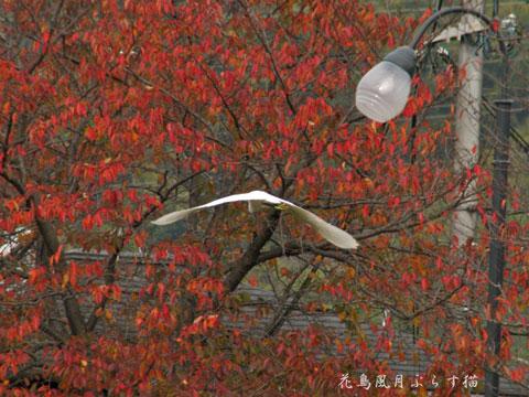 紅葉とサギ