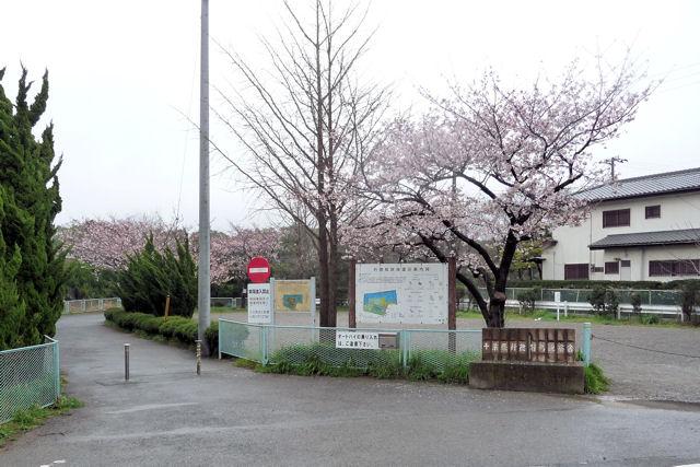SAKURA040517.jpg