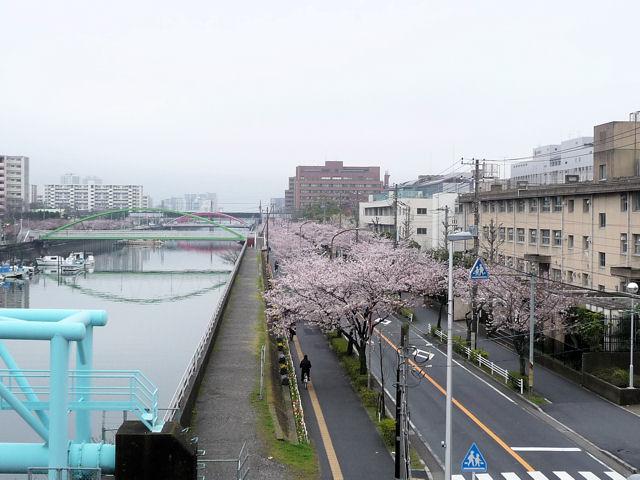 SAKURA040530.jpg