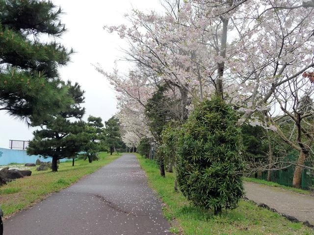 SAKURA040555.jpg