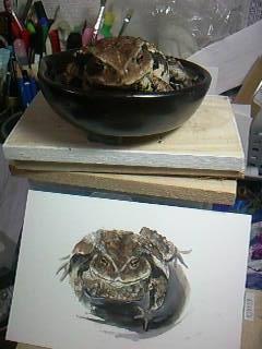 カエルの絵5