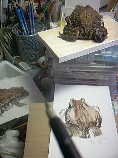 カエルの絵6