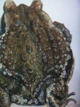 カエルの絵2