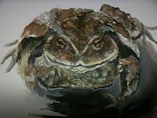 カエルの絵1