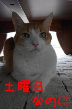 1_20110730130313.jpg