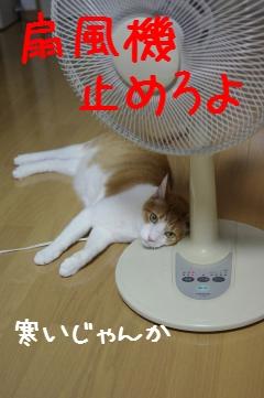 1_20110821083101.jpg