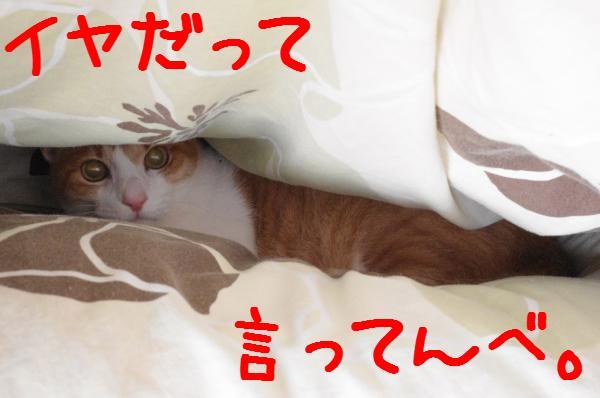 1_20111126220759.jpg
