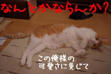 2_20110706205447.jpg
