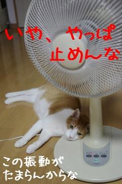2_20110821083101.jpg