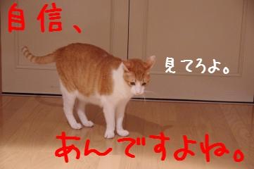 2_20110906233032.jpg
