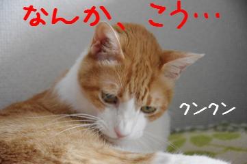 2_20110911182332.jpg