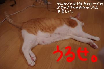 3_20110731085318.jpg