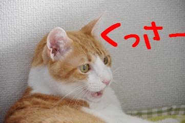 3_20110911182331.jpg