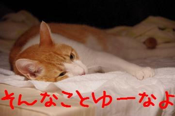 3_20110915215739.jpg